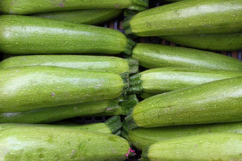 Zucchini. Fresh zucchini, green vegetables on local farmer market, freshly harvested courgette, summer squash. Organic green zucch stock images