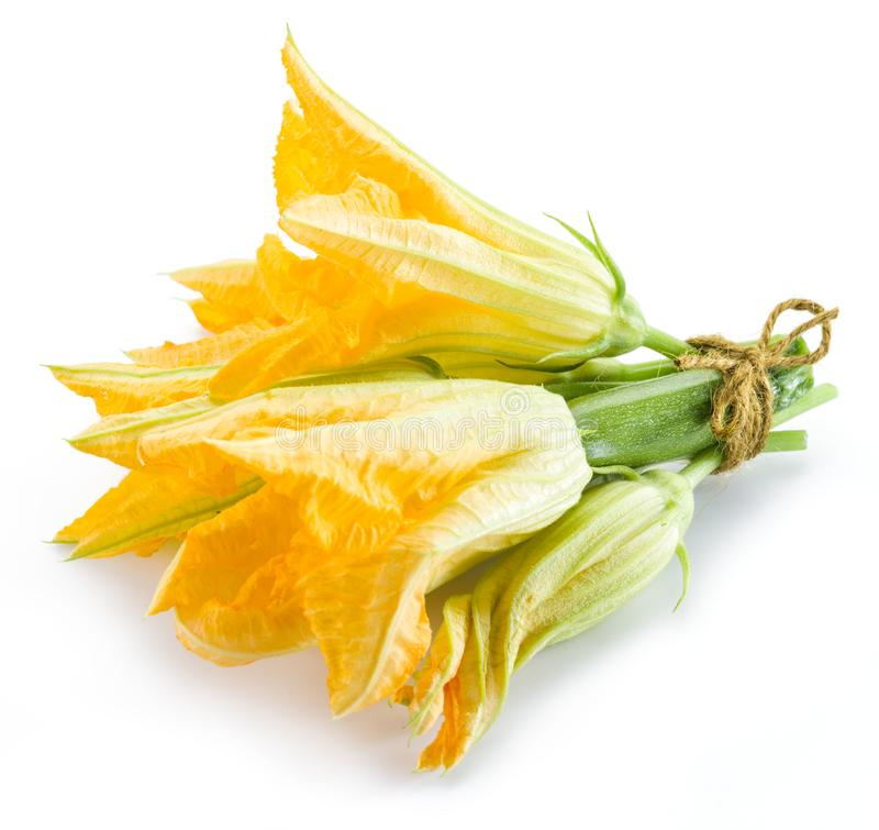 Zucchinin blommar på en vit bakgrund royaltyfri fotografi