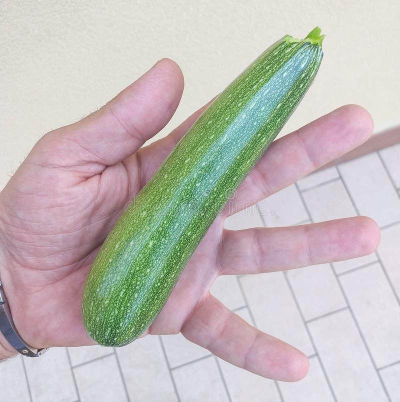 Zucchinin eller zucchinin är art av Cucurbitaceaefamiljen vars frukter är använt omoget Det är en årlig växt med en flexi royaltyfri bild