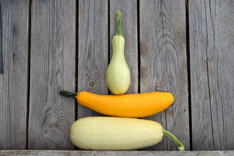 Zucchiny! royaltyfri bild