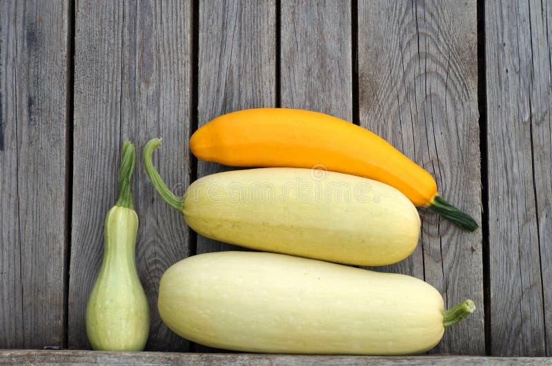 Zucchiny! arkivfoton