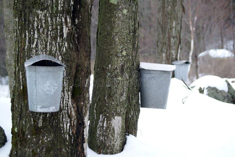 Zuckern in Vermont lizenzfreies stockfoto