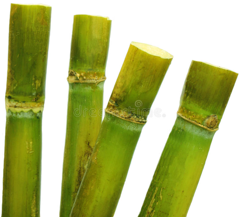 Zuckerrohr stockfotos