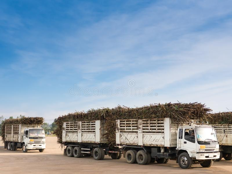 Zuckerrohr-LKW, der lange Stämme des Zuckerrohrs auf seiner Weise zur Zuckerraffineriefabrik transportiert Zuckerverarbeitungsanl lizenzfreies stockfoto