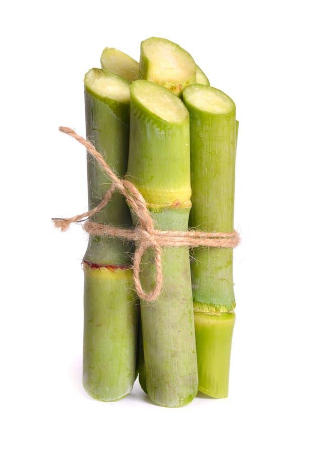 Zuckerrohr lokalisiert auf weißem Hintergrund stockfotografie