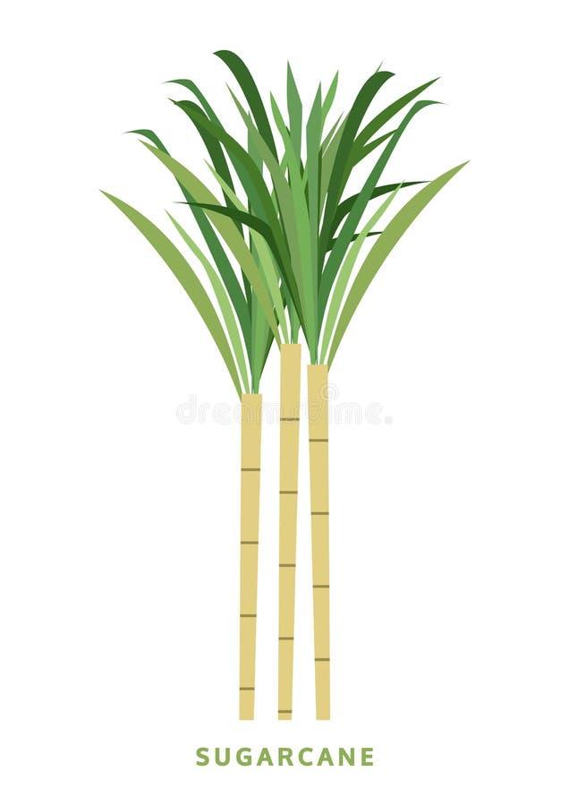 Zuckerrohr, Stockvektorillustration, Symbol stock abbildung