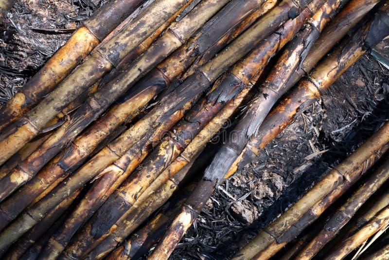 Zuckerrohr, Zuckerrohrplantagenbrand, Zuckerrohr brannte Ausschnitt auf Bodenfeldplantage, Zuckerrohrhintergrund lizenzfreie stockfotos