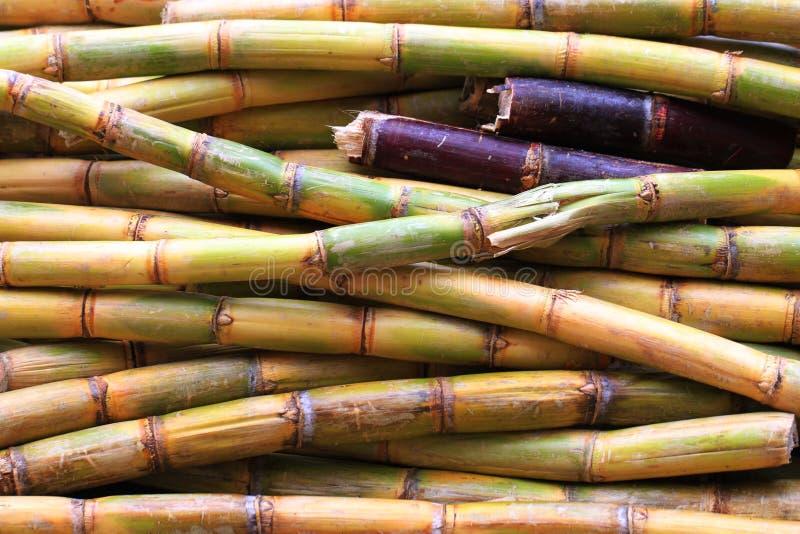 Zuckerrohrbeschaffenheit als netter natürlicher Hintergrund stockbilder