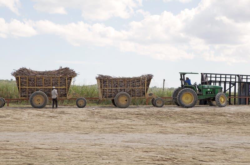 Zuckerrohrtransport lizenzfreies stockfoto