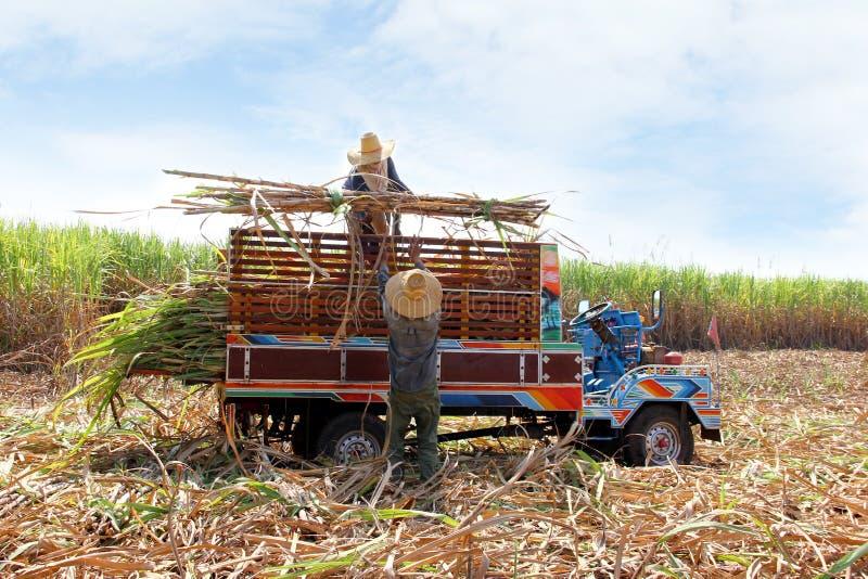Zuckerrohrtransport lizenzfreie stockbilder