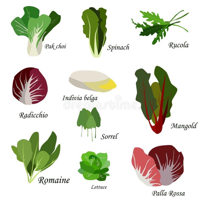 Zuckerverschlüsse, Tomate, Kopfsalat und schwarze Oliven Blattgemüseikonen eingestellt Organische und vegetarische Illustration m stock abbildung