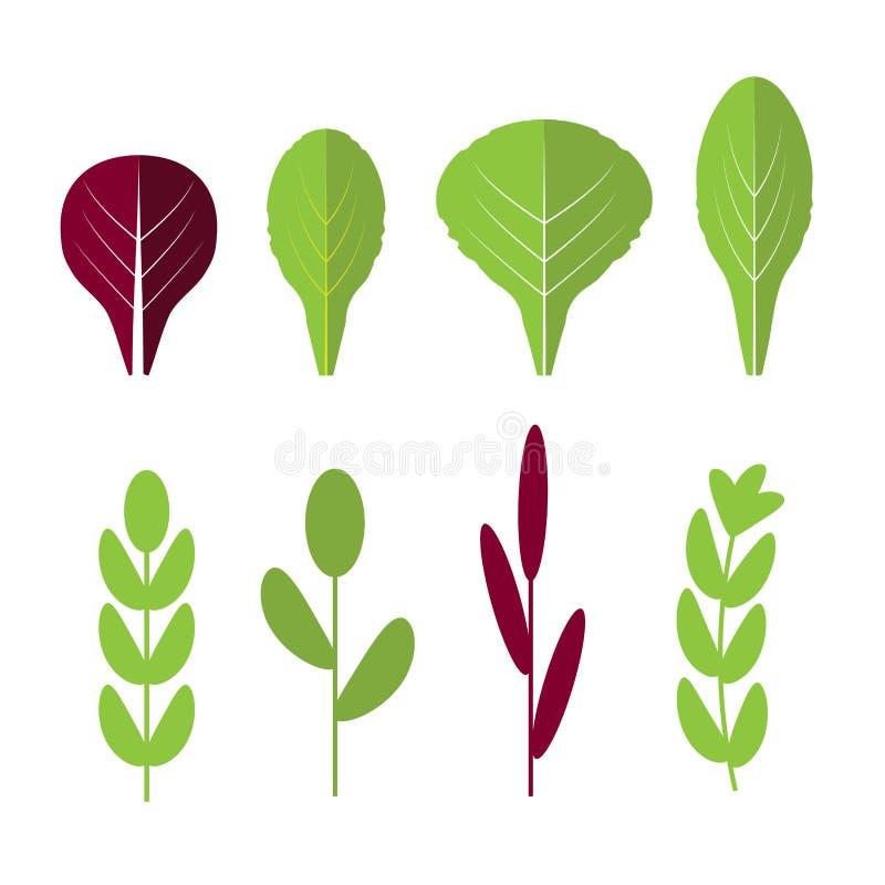 Zuckerverschlüsse, Tomate, Kopfsalat und schwarze Oliven Flache Ikonen des Blattgemüses eingestellt Organisch und vegetarisch vektor abbildung