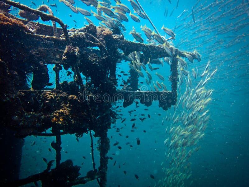 Zuckerwrack, Unterwasserlieferung lizenzfreies stockbild