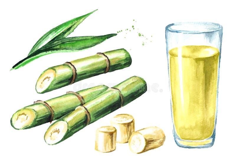 Zuckerzuckerrohrsaft mit Trinkglas-, Blatt- und Schnittstückstocksatz Gezeichnete Illustration des Aquarells Hand lokalisiert auf lizenzfreie abbildung