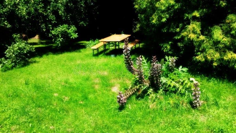 zuhause... auf der Wiese hinter dem Haus royalty free stock photography