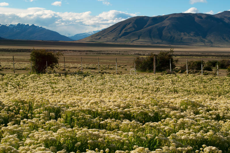 Zuid-Amerika, Argentinië, Patagonië, Santa Cruz Province stock afbeeldingen