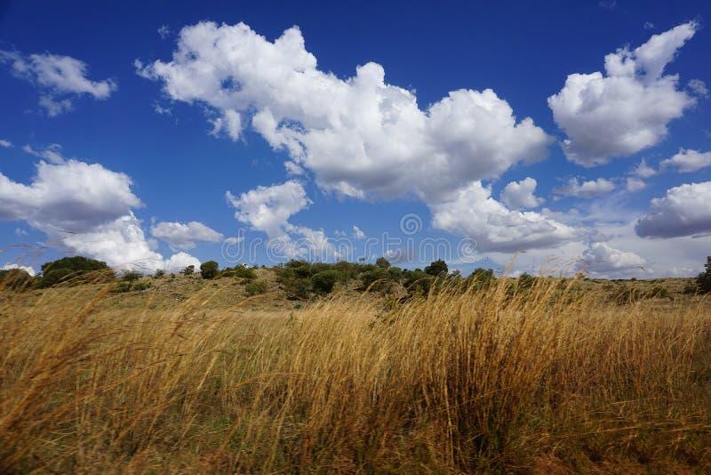 Zuidafrikaanse savanne met blauwe Hemel in zomer stock foto