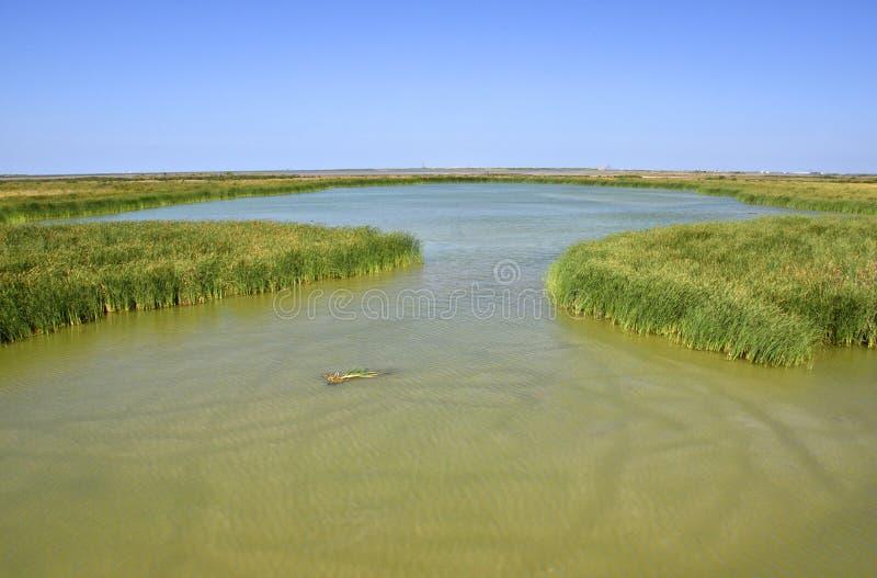 Zuiden Texas Wetlands stock foto's