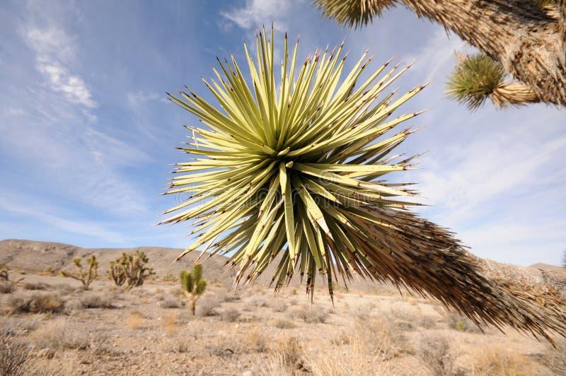Zuidwestelijke woestijn stock fotografie