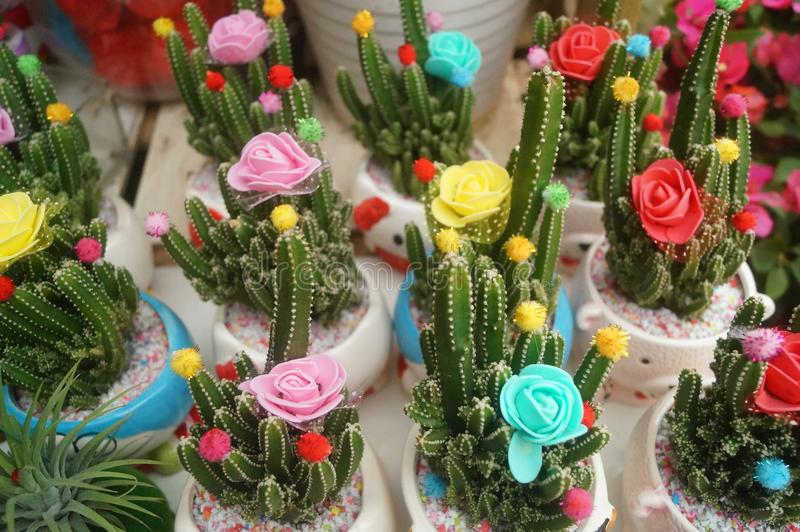 Zuilvormige cactus succulents royalty-vrije stock foto's