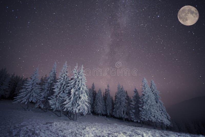 Zuivelstar trek in de winterhout royalty-vrije stock foto