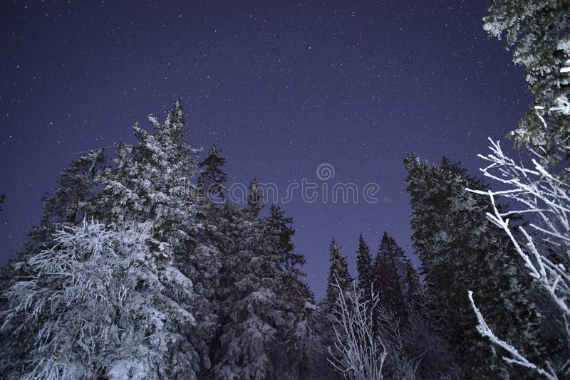 Zuivelstar trek in het de winterhout royalty-vrije stock foto