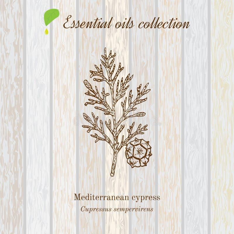 Zuivere etherische olieinzameling, cipres Houten textuurachtergrond stock illustratie