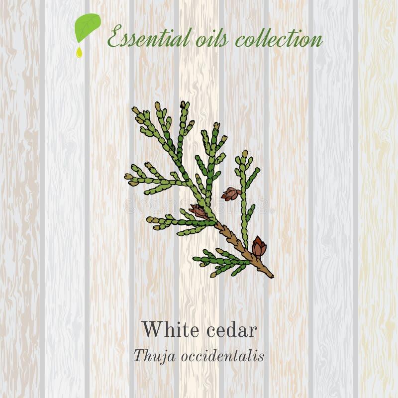 Zuivere etherische olieinzameling, witte ceder Houten textuurachtergrond royalty-vrije illustratie