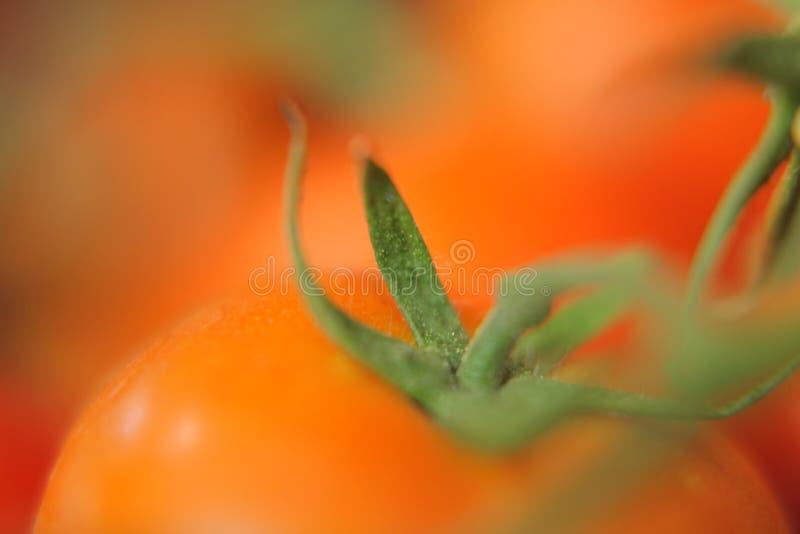 Zuivere rode verse tomaat royalty-vrije stock foto