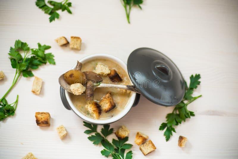 Zupny puree z pieczarkami i croutons w pucharze obraz royalty free