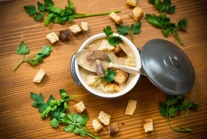 Zupny puree z pieczarkami i croutons w pucharze zdjęcia royalty free