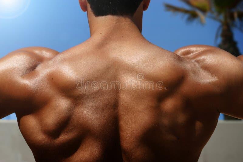 Zurück vom Bodybuilder lizenzfreie stockfotos