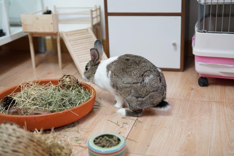 Zurück vom Kaninchen lizenzfreie stockbilder