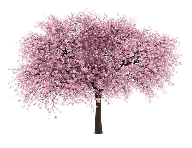 Zure kersenboom die op wit wordt geïsoleerd stock illustratie