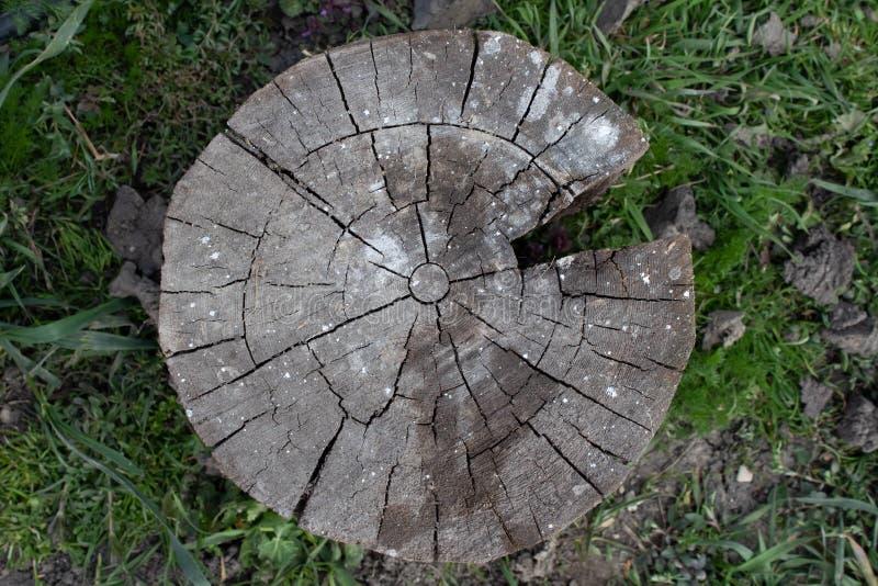 Zusammenfassung der alten Klotzholzbeschaffenheit, hölzerner Stumpf des Klotzes als Hintergrund oder Tapete, hölzernes Stumpfmust stockbilder