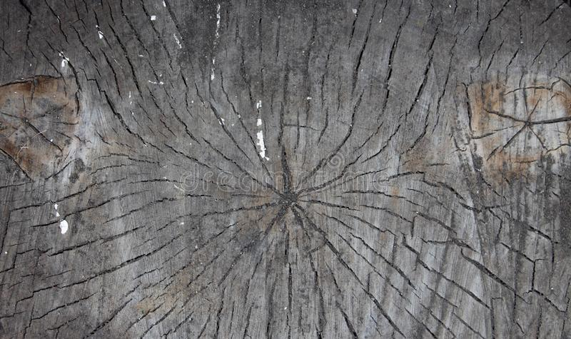 Zusammenfassung der alten Klotzholzbeschaffenheit, hölzerner Stumpf des Klotzes als Hintergrund oder Tapete, hölzernes Stumpfmust stockfotos