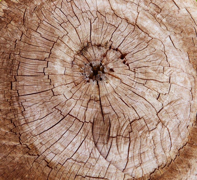 Zusammenfassung des Baumstumpf-Ausschnittoberflächengebrauches für Beschaffenheit, backgrou lizenzfreie stockfotografie