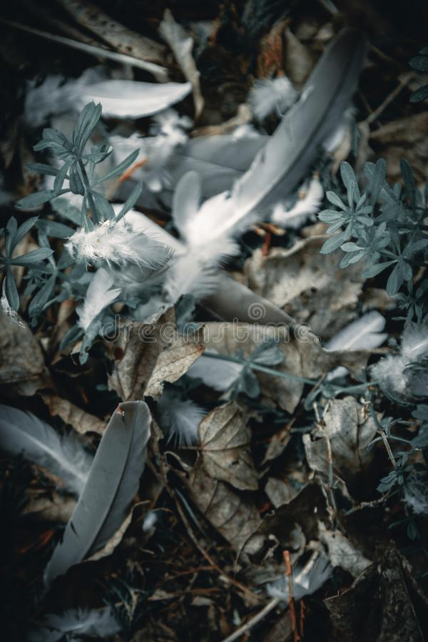 Zusammenfassungs-schwermütige weggeworfene Federn stockfotografie