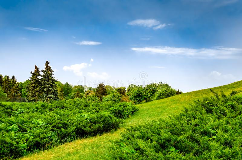 Zusammengesetzte Sommerlandschaft auf Abhangwiese lizenzfreies stockbild