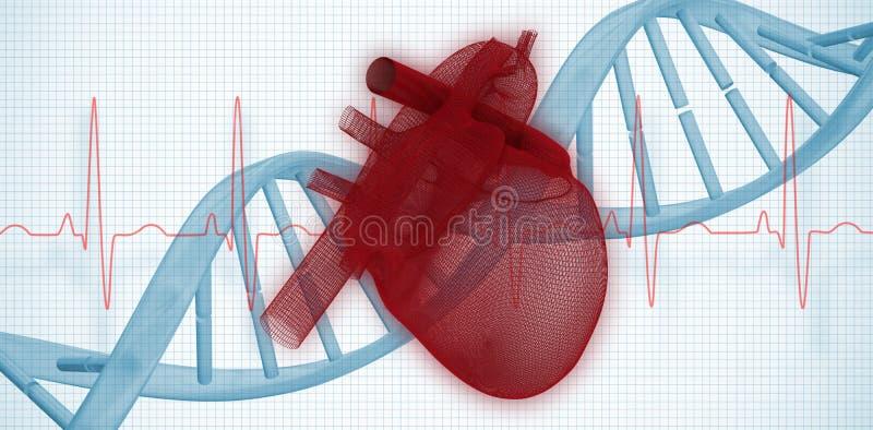Zusammengesetztes Bild der Illustration von? ï ¿ ½? ï ¿ ½ 3d menschliches Herz vektor abbildung