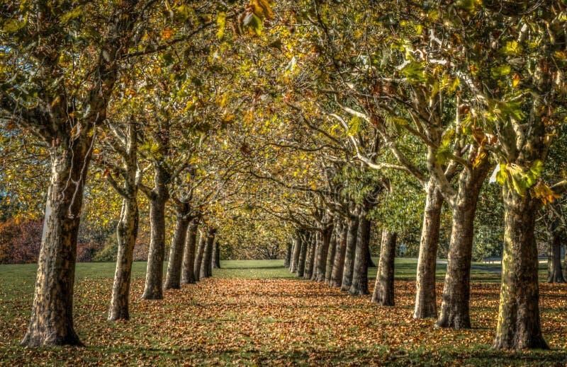 Zusammenlaufende abstrakte Kunst der Herbstbäume lizenzfreie stockbilder