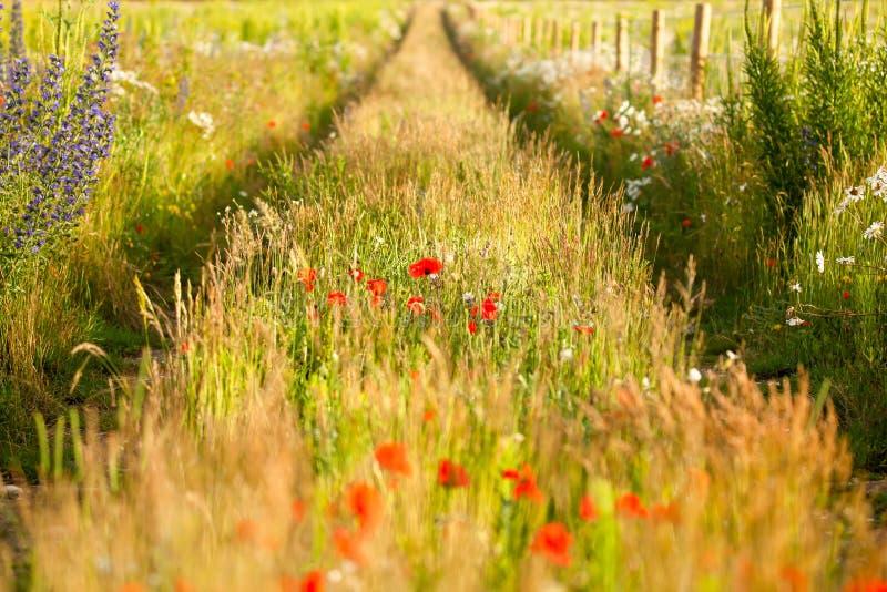 Zusammenlaufende Bahnen in einer Blumenwiese stockfotografie