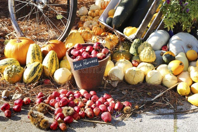 Zusammensetzung des bunten Gemüses Kürbis, appels, Zucchini stockfoto