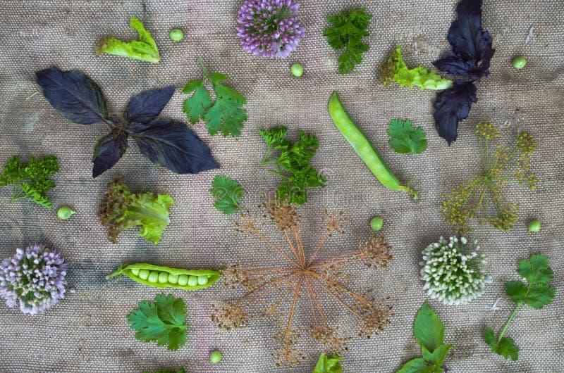 Zusammensetzung des Gemüses und der Kräuter stockfoto