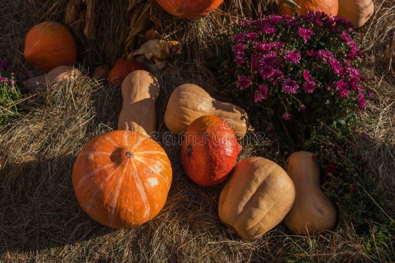 Zusammensetzung von den Kürbisen, von den Blumen und vom Weizen für Danksagungstag stockbilder