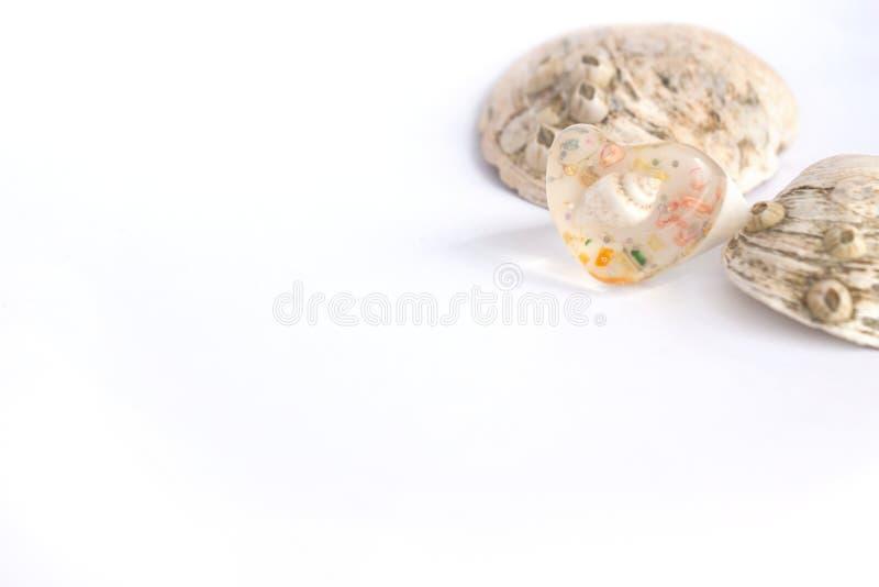 Zusammensetzung von exotischen Seeoberteilen und von heartshaped Ring auf einem weißen Hintergrund, Kopienraum lizenzfreies stockbild