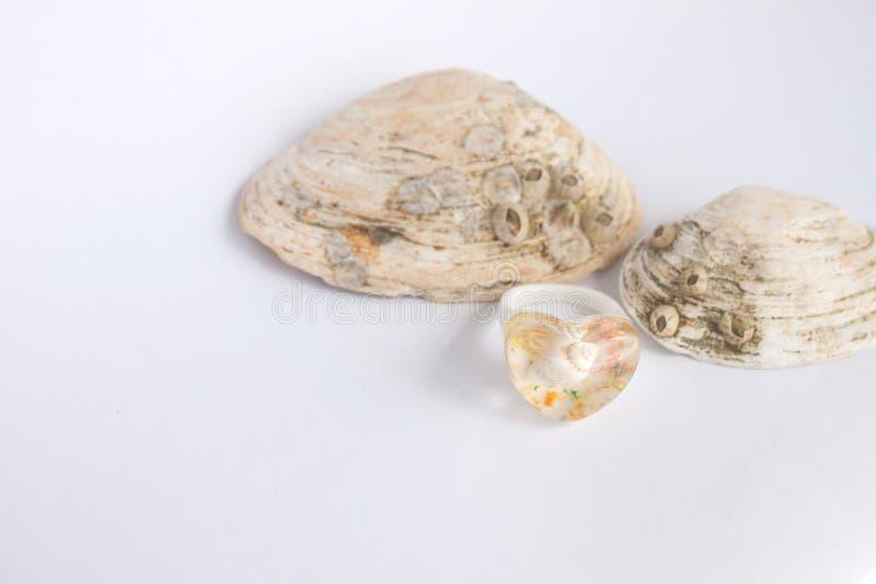 Zusammensetzung von exotischen Seeoberteilen und von heartshaped Ring auf einem wei?en Hintergrund, Kopienraum stockfotografie