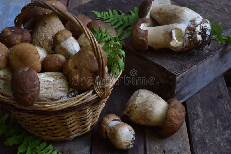 Zusammensetzung von porcini im Korb auf hölzernem Hintergrund Weiße essbare wilde Pilze kopieren Sie Platz für Ihren Text lizenzfreie stockfotos