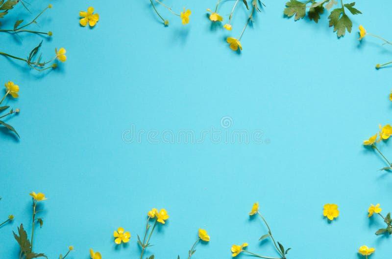 Zusammensetzung von Wildflowers auf blauem Hintergrund Beschneidungspfad eingeschlossen stockbilder