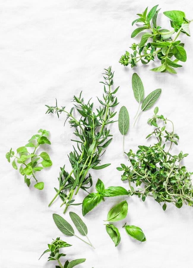 Zusammenstellung von aromatischen Gartenkräutern auf einem hellen Hintergrundestragon, Thymian, Oregano, Basilikum, Salbei, Minze lizenzfreie stockfotografie